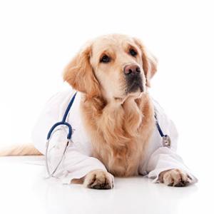 Общие ветеринарные процедуры