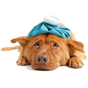 Лечебные манипуляции с домашними животными