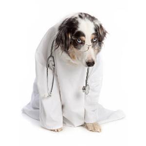 Ветеринарные хирургические операции