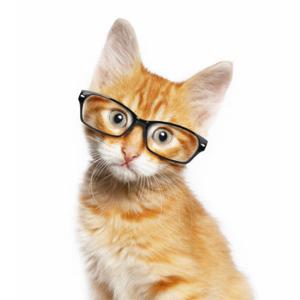 Офтальмологические операции домашним животным