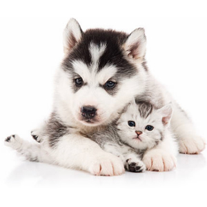 Прививки для домашних животных (вакцинация)