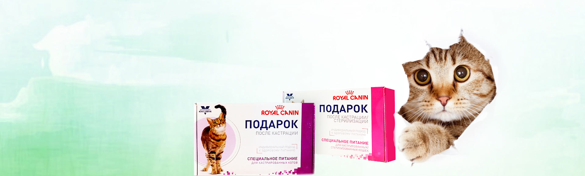 Подарок для питомца после стерилизации или кастрации